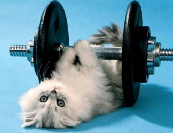 Cat Lifting Weights