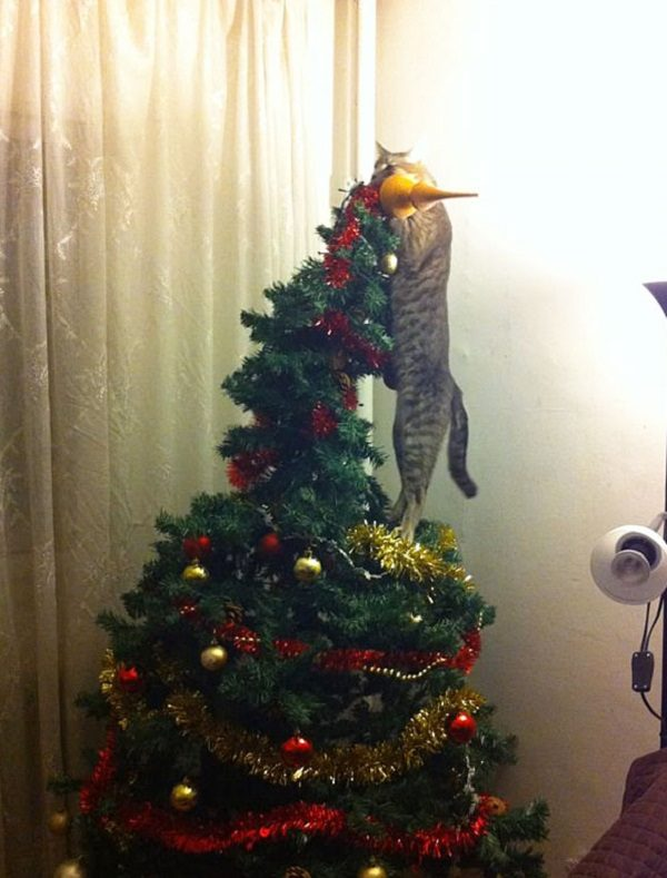 Fairy Cat on Top of a Christmas Tree
