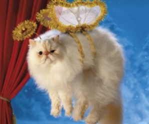 Ten Cats on Top of Christmas Trees Who Think They Are Fairies