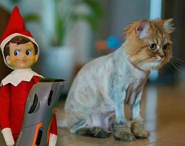 This Cat Thinks the Elf on the Shelf Is Mean and Nasty
