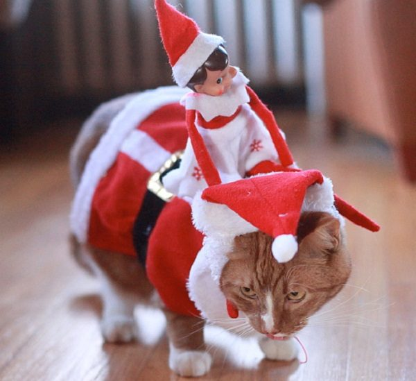 This Cat Feels Used by the Elf on the Shelf