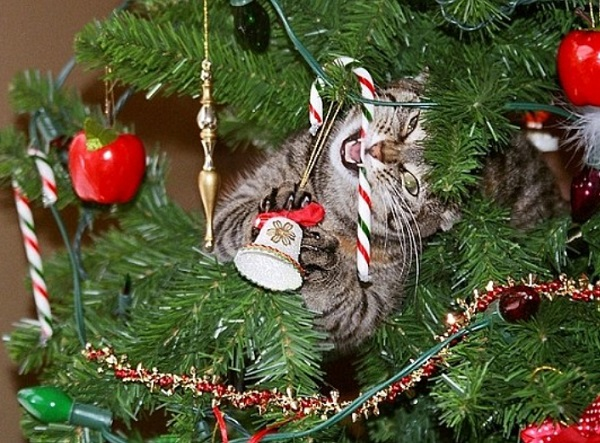 Cat Destroying Christmas Tree Candy Cane