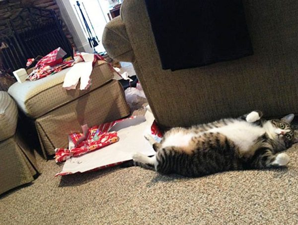 Cat Destroying Christmas Presents