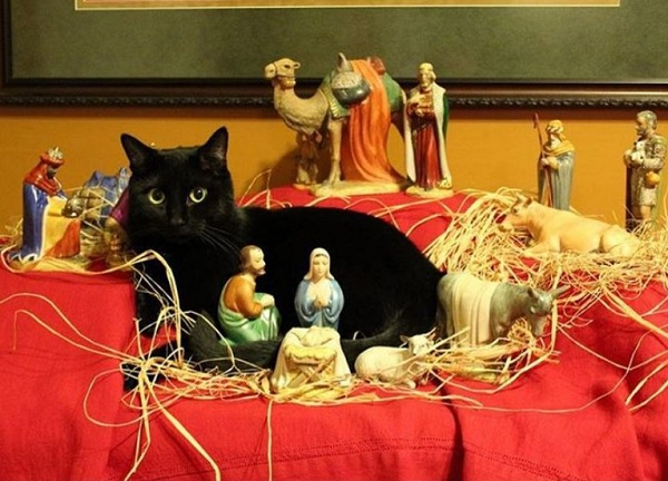 Cat Destroying Nativity Scene