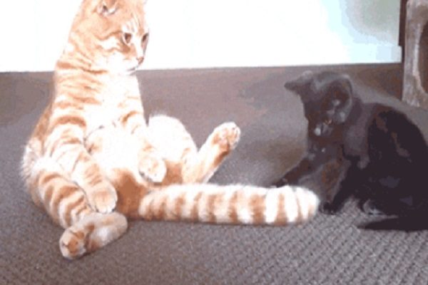 Cat Loves Their Tail