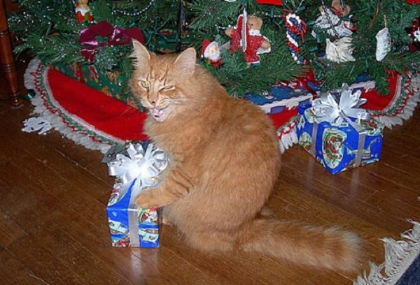 Ten Super Excited Cats Who Can't Wait for Christmas Day