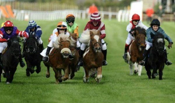 Pickenham mouse racing betting betting lab