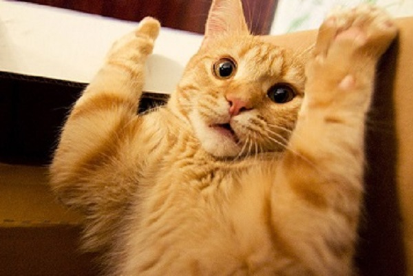Cat With Paws in the Air