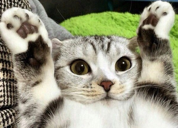Ten Cats Who Surrender or Just Love Putting Their Paws Up