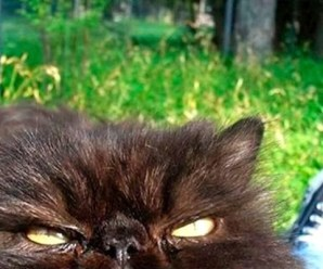 Ten Photos of Cats Taken Moments Before They Attacked