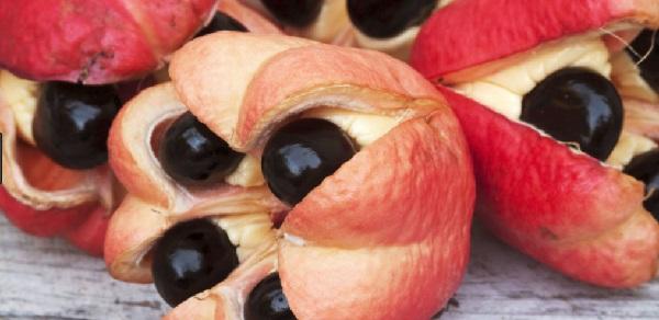 Ackee Apple (Blighia sapida)