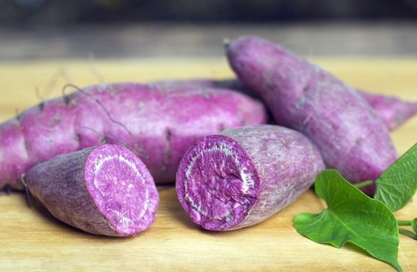 Purple Sweet Potatoes (Ipomoea batatas)