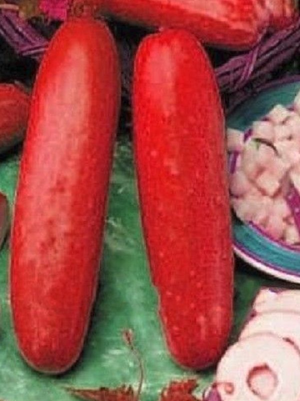 Red Cucumbers (Cucumis sativus)