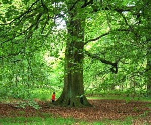 The Top 10 Tallest Species of Trees From Around the World