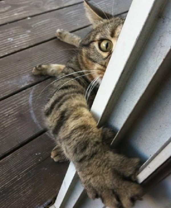 Cat About to Attack