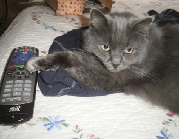 Cat Hogging the TV Remote