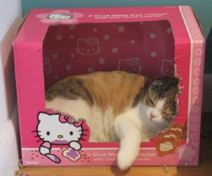 Ten Cats Who Think They Really Are the Fictional Character Hello Kitty