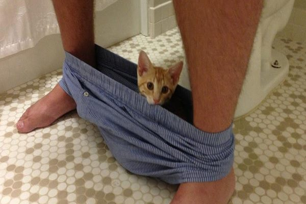 Ten Crazy Cats in Pants Who Will Sleep Just About Anywhere!
