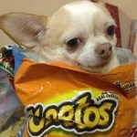 Ten Fun Loving Dogs Finding Inside Their Owner's Food