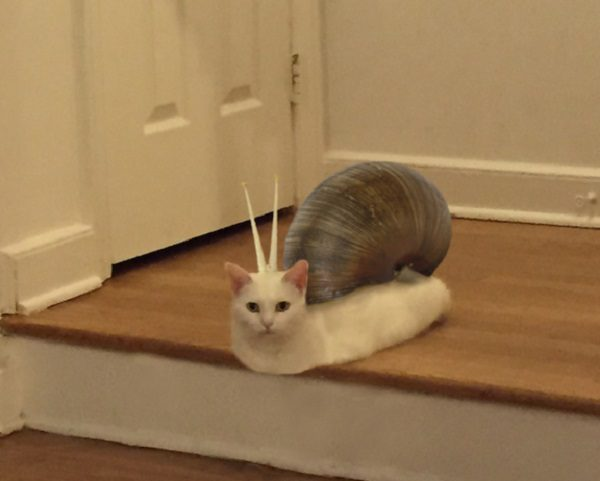 Cat Made to Look Like a Snail
