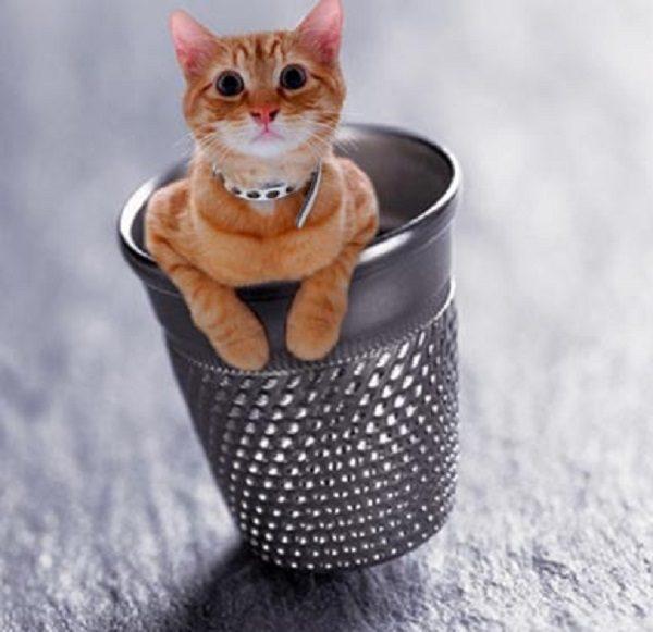 Cat Made Super-Small