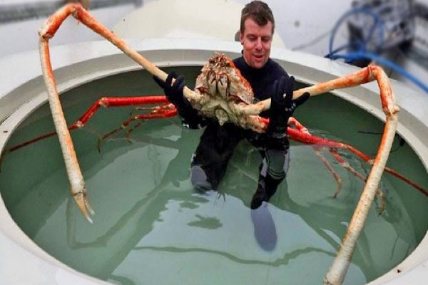 Ten of the Worlds Biggest Crustaceans and Where to Find Them