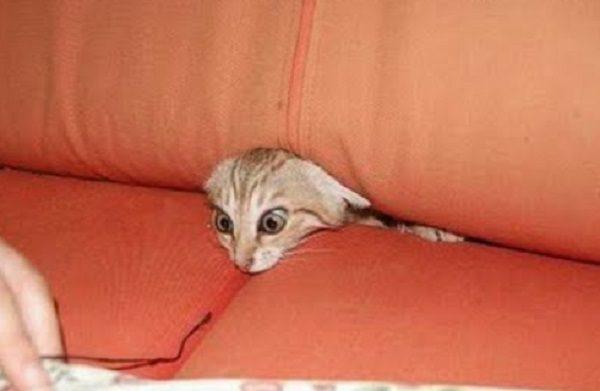 Cat living in sofa