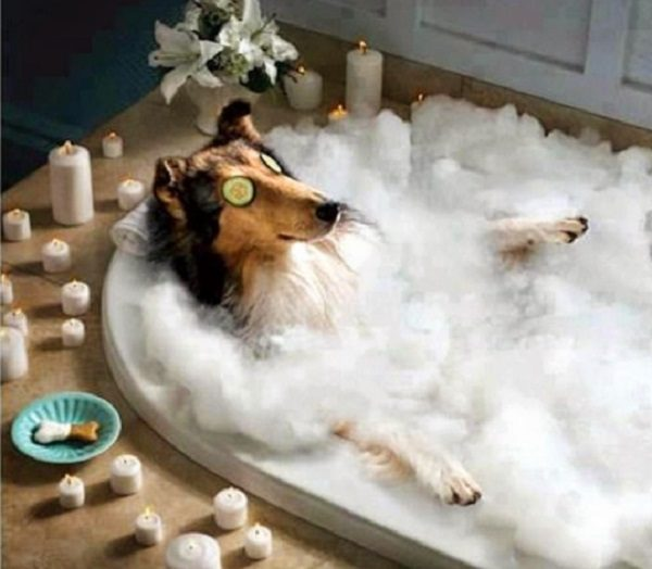Ten Dogs Who Love Having a Bath More Than Their Owners