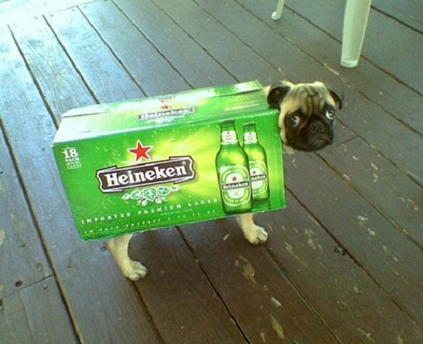 Dog Inside a Box of Heineken