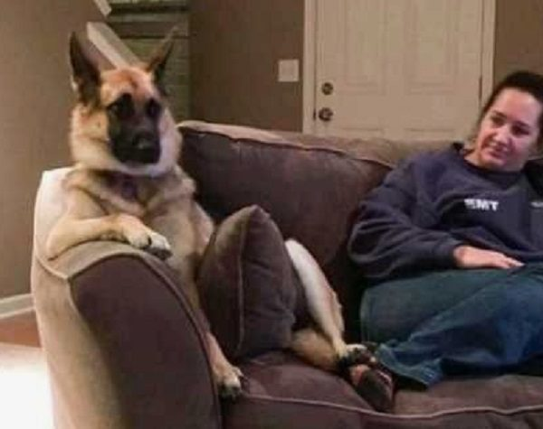 Ten of the Funniest German Shepherds You Will Ever See