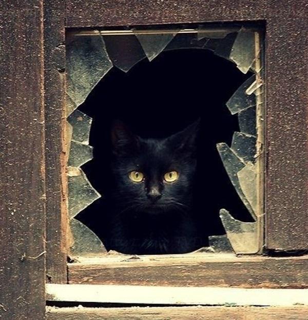 Unlucky black cat