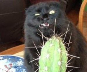 Ten of the Most Unluckiest Black Cats You Will Ever See