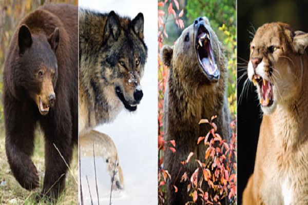 The Top 10 Largest Species of Carnivores (Meat-eaters) in the World
