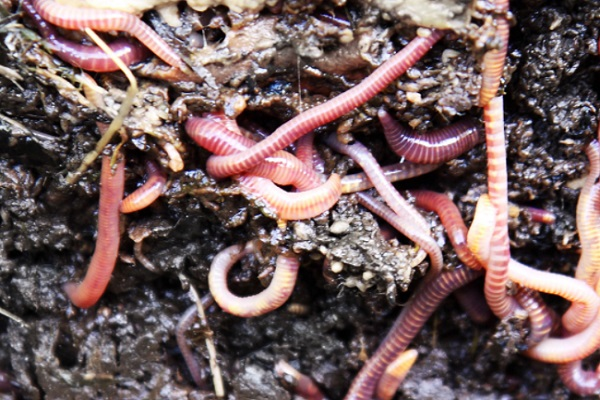 Are Worms the Most Abundant Type of Animal on Earth?