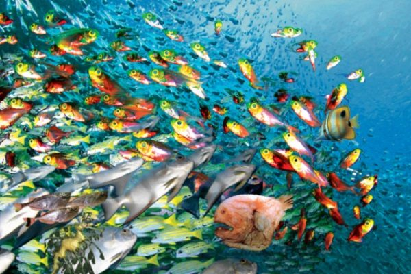 Are Fish the Most Abundant Type of Animal on Earth?