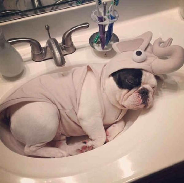 Dog in Sink