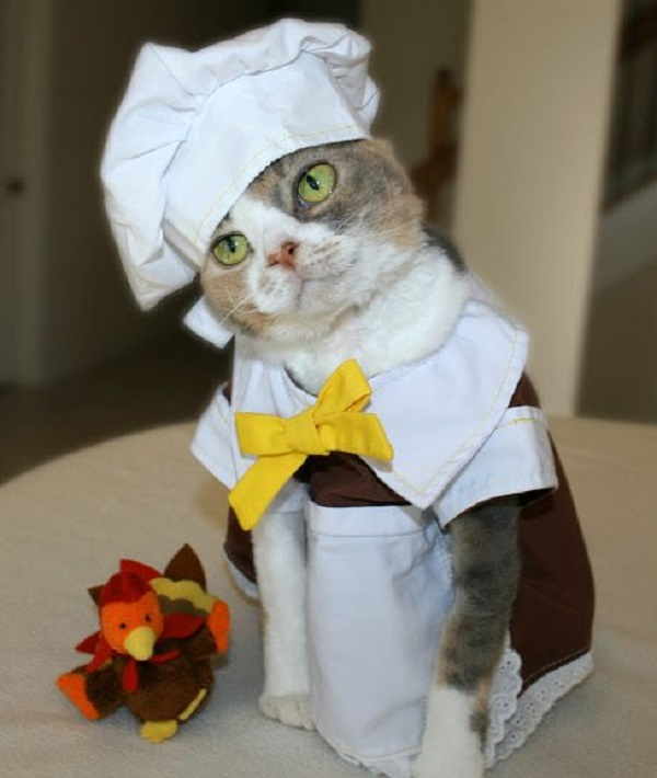 Cat Dressed as a Chef