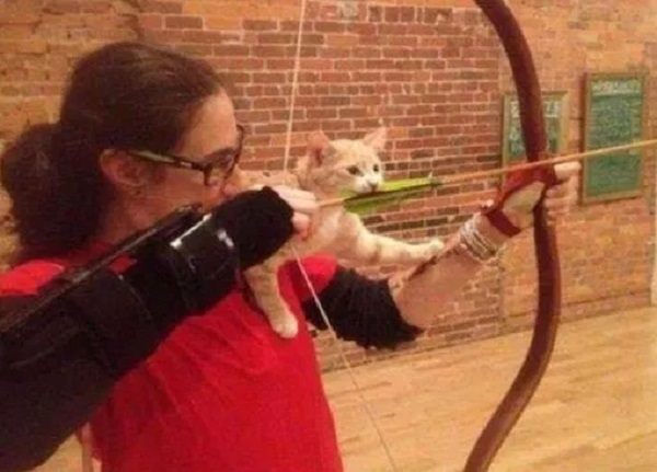 Cat Learning How Arrows Fly