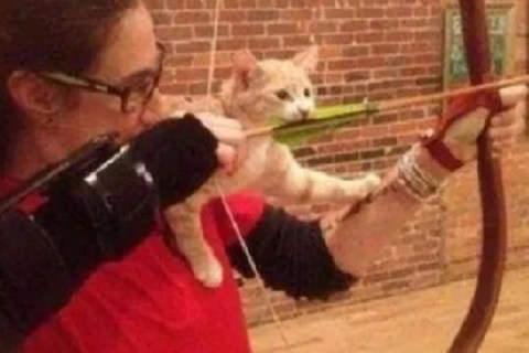Ten Photos Taken Right Before the Moment a Cat Learned a Lesson