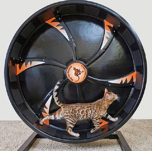 Cat Exercise Wheel