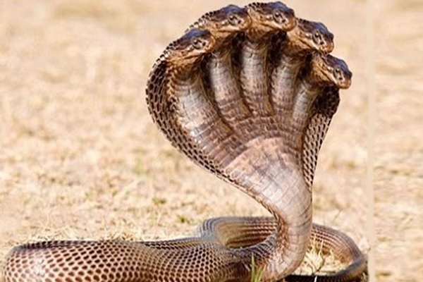 The Top 10 Deadliest and Most Venomous Snakes in the World