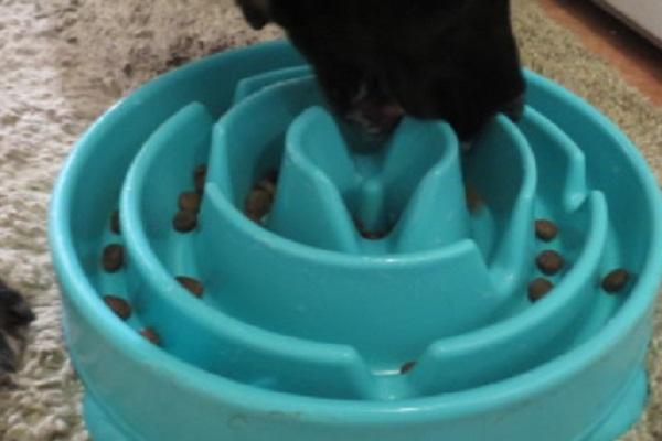 Kyjen Slo Bowl Dog Bowl