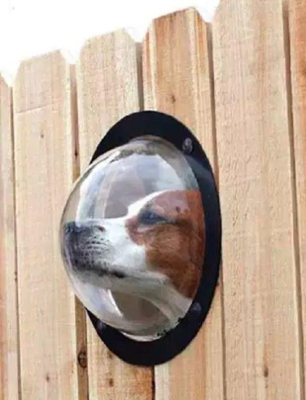 PetPeek Fence Window