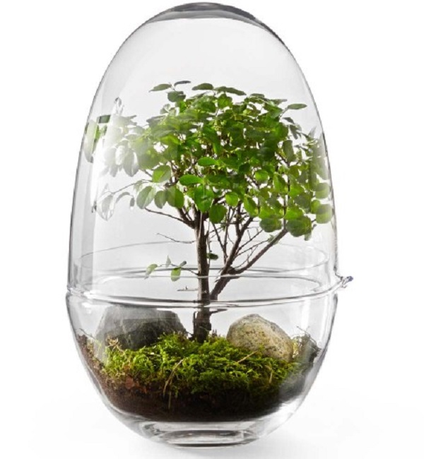 Mini Greenhouse Gift Idea for a Teacher