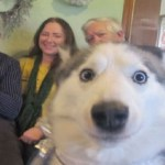 Ten of the Very Best Animal Photobombs You Will Ever See