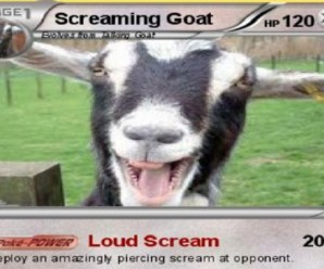 Ten of the Very Best Screaming Goat Videos You Need to See