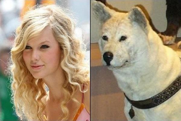 Taylor Swift Looks Like an Akitas