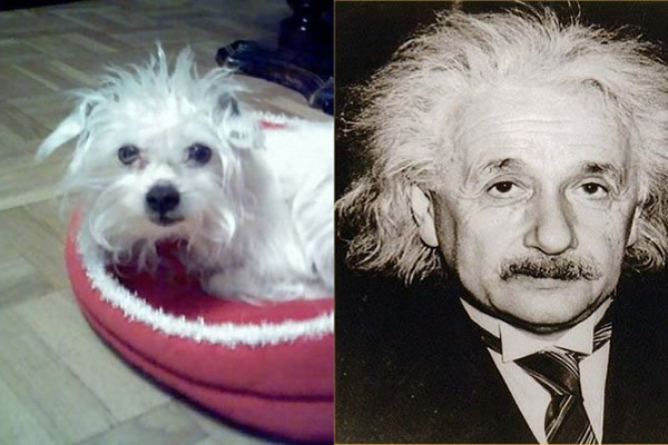 Albert Einstein Looks Like a Terrier
