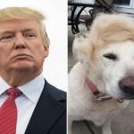 Ten Celebrity Dog Look-A-likes Who Look Like Twins