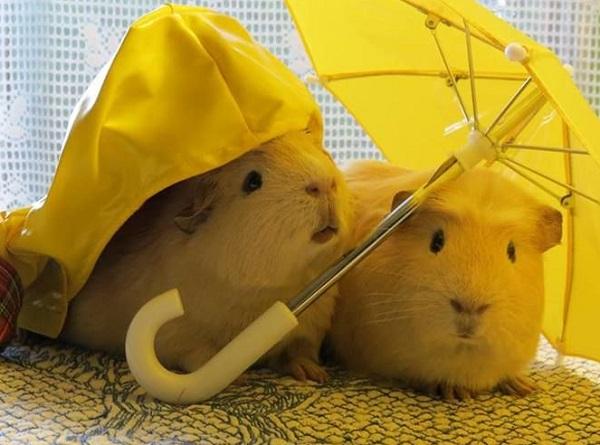 Romantic Date in the Rain